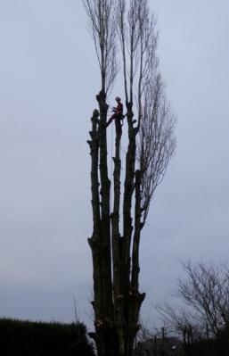 Élagage d'arbres à Courcelles