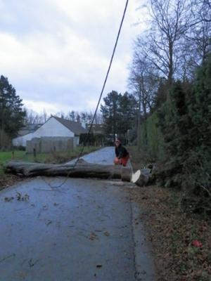 Abattage d'arbres à Seneffe
